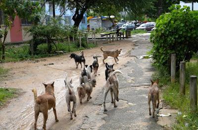 Campo Bom terá castramóvel para atender animais de rua