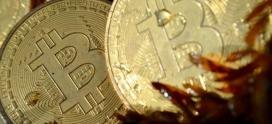 """Bitcoin foi ao fundo do poço e sobreviveu"", diz presidente da maior Bolsa de Valores do mundo"