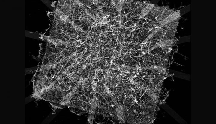 """Cientistas criaram um """"Cérebro Sintético"""" que armazena memórias em prata"""